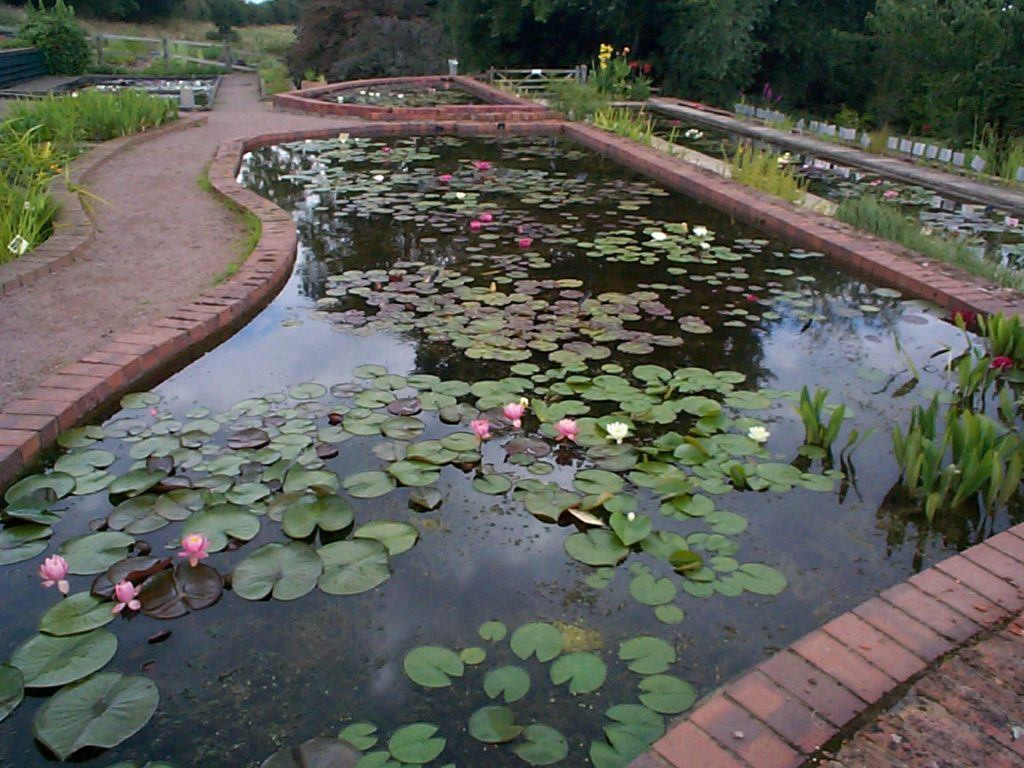 View of well stocked happy ponds with lilies and iris in flower