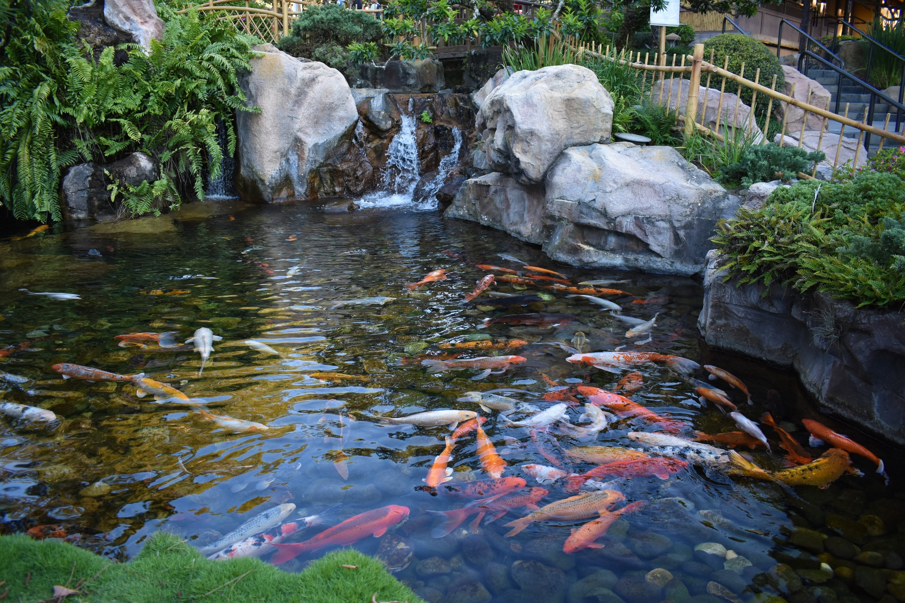 What Plants Can I Put In My Koi Pond Merebrook Pond Plants