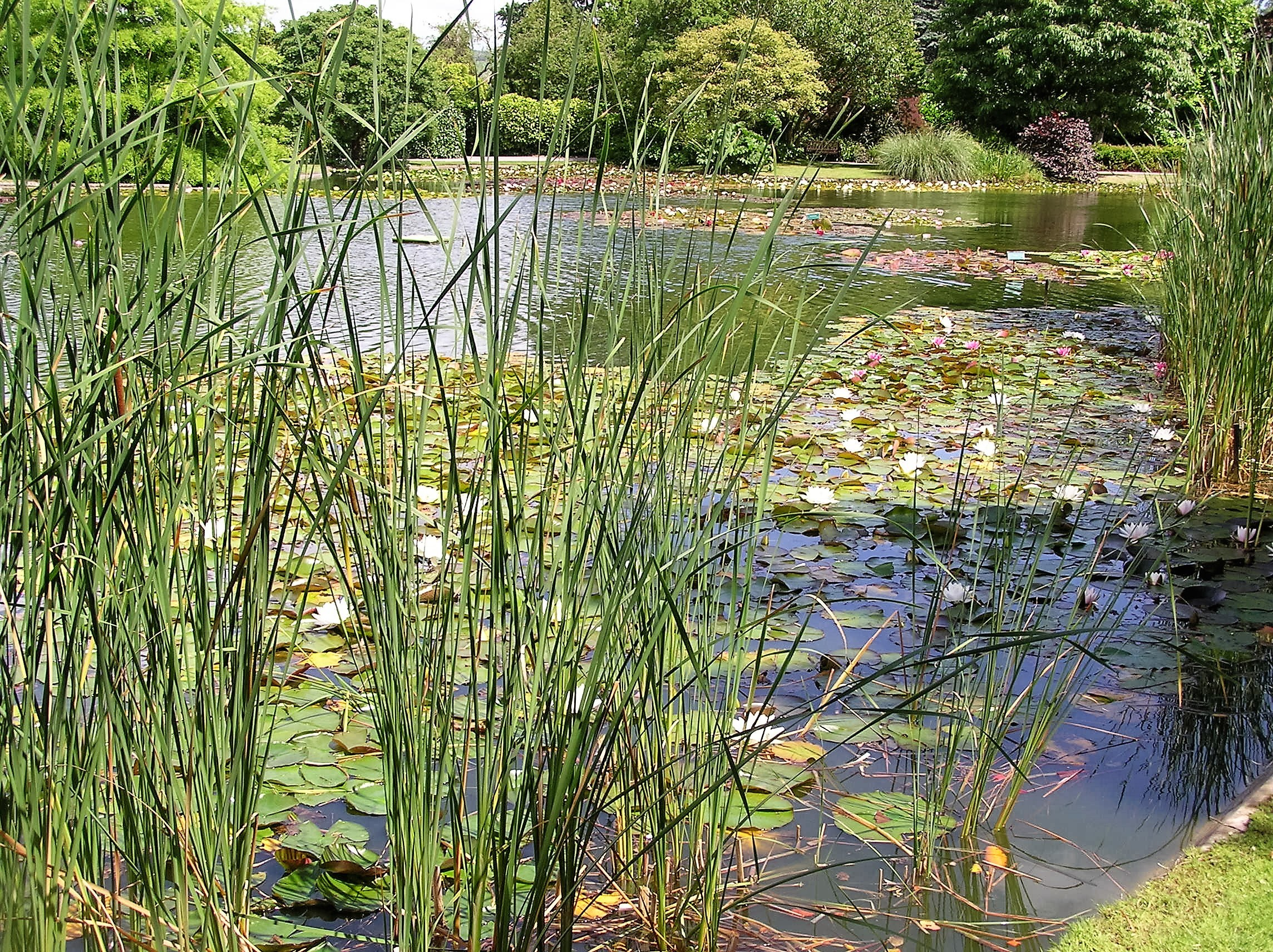 How Many Plants Do I Need For Planting My Pond Merebrook Pond