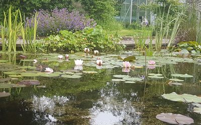 A place for everything – Creating a planting plan for your pond